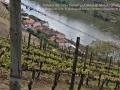 """17-Viñedos del """"Alto Douro"""" en Portugal"""